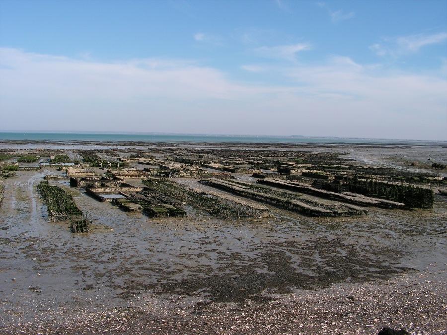 Cose da vedere in Bretagna Allevamento di ostriche a Cancale