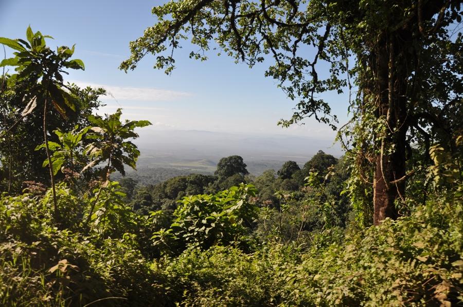Safari in Tanzania Panorama