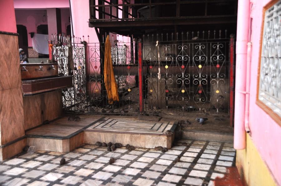 Interno del tempio dei topi
