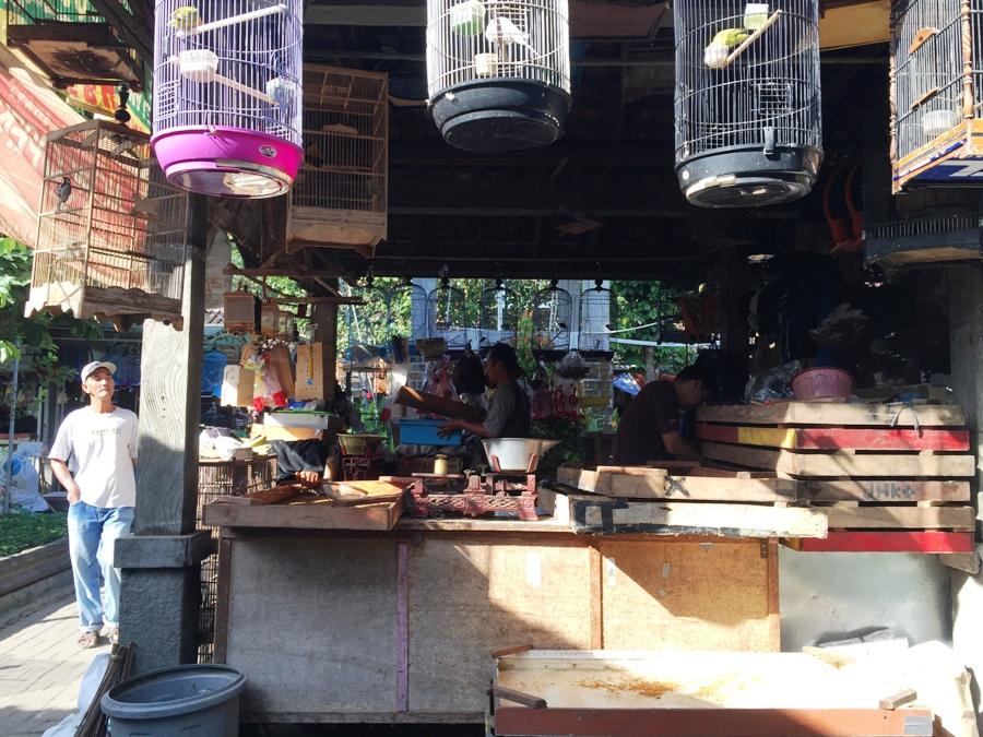 Yogyakarta Mercato degli Uccelli
