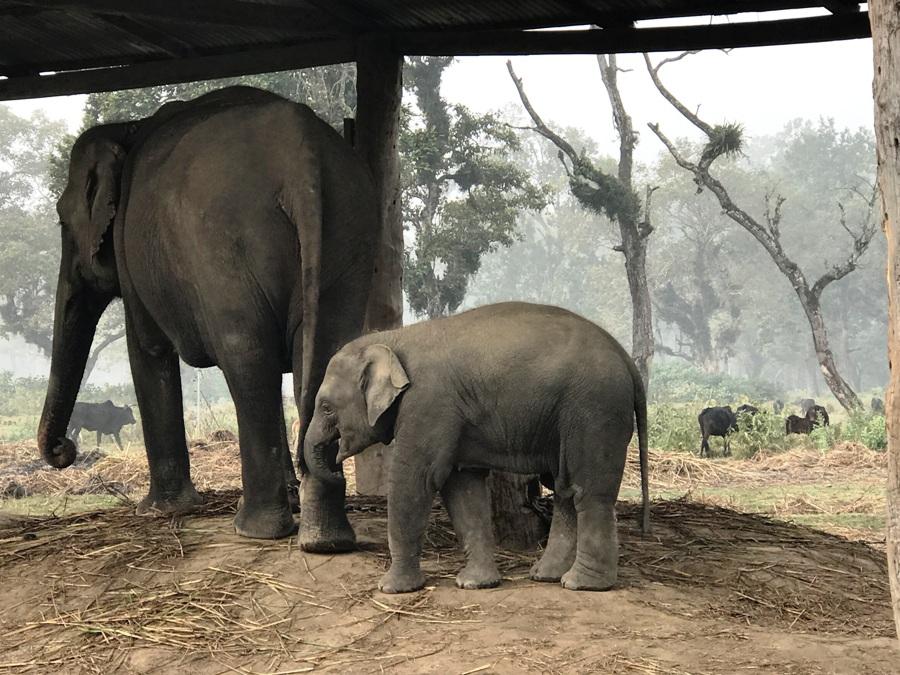 Elephant Breeding Center