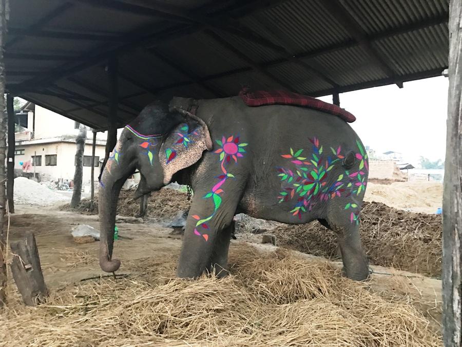 Elefante decorato per il Festival