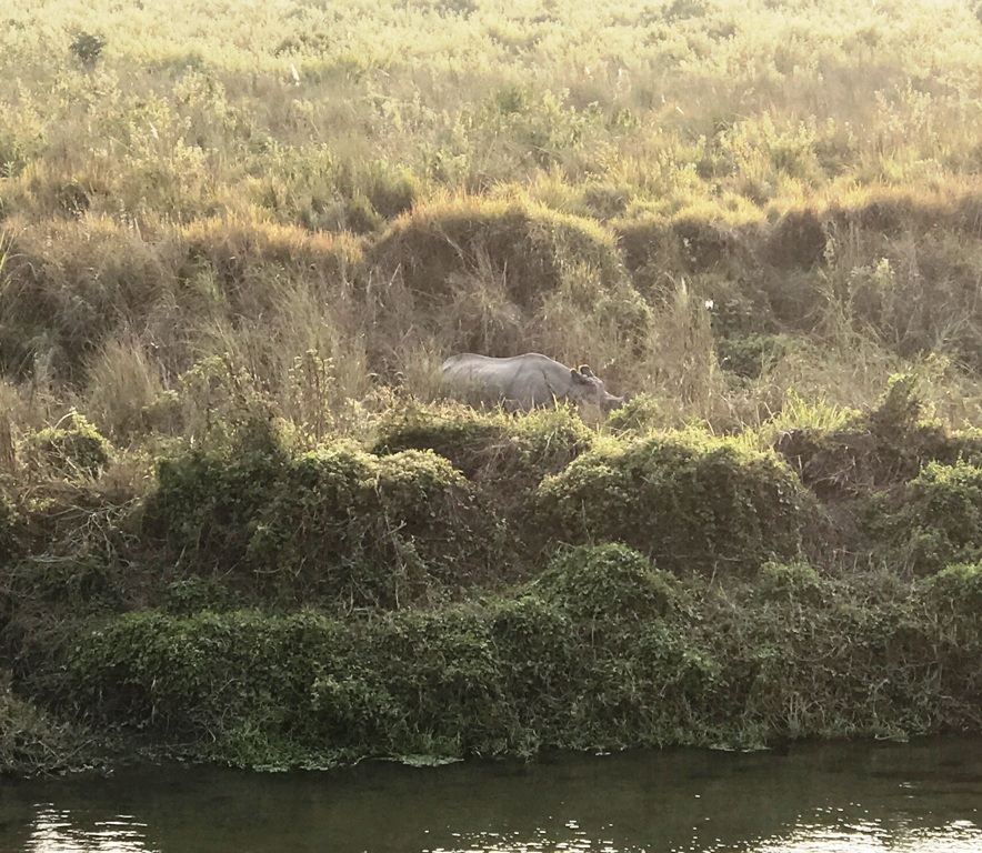 cosa fare nel Parco Nazionale di Chitwan