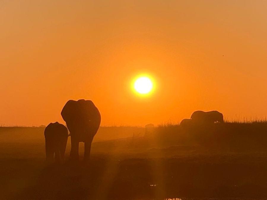 Safari nel Chobe