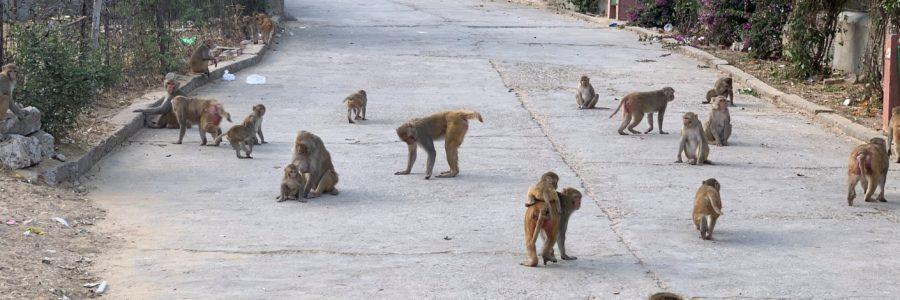 Tempio delle scimmie