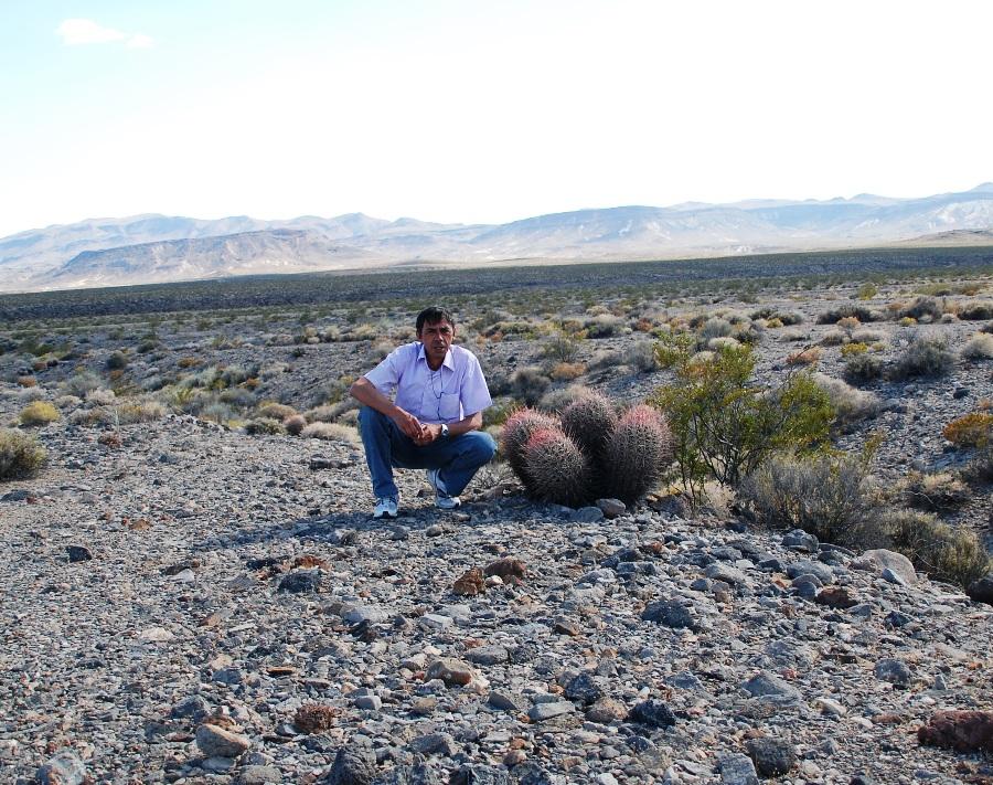 Vegetazione nella Death Valley