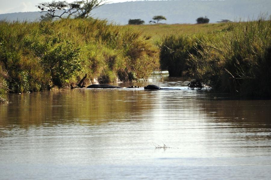 Grande Migrazione in tanzania