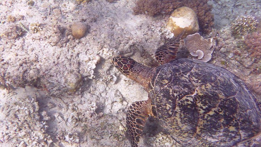 Tartaruga nel mare di Gili Air