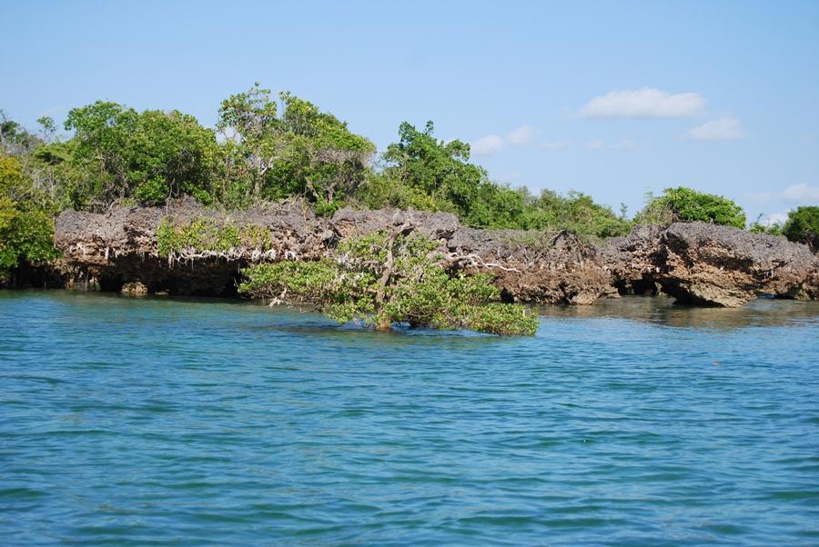 Mangrovie a Zanzibar