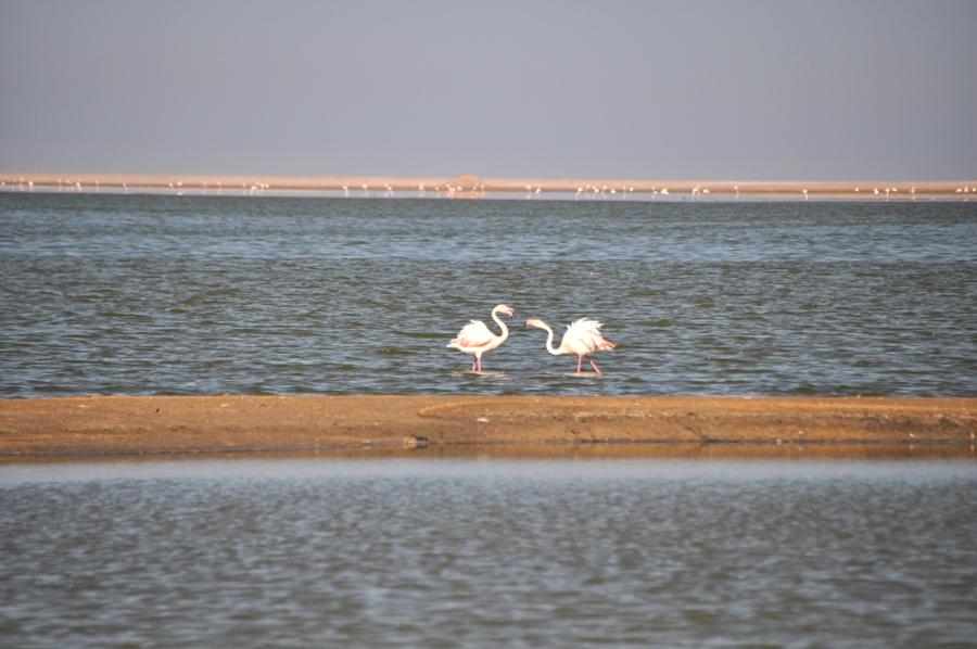 Cosa vedere a Walvis Bay