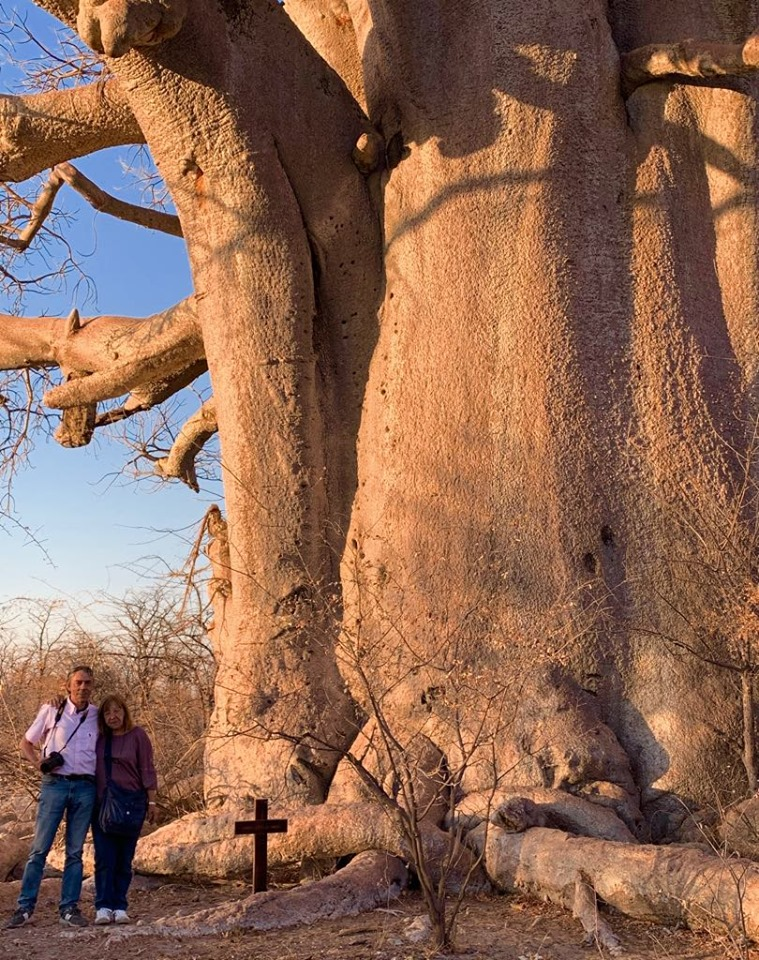 Un baobab gigantesco
