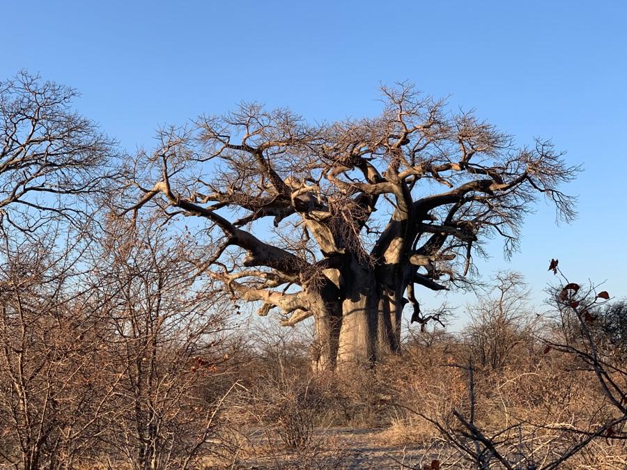Itinerario di viaggio in Botswana