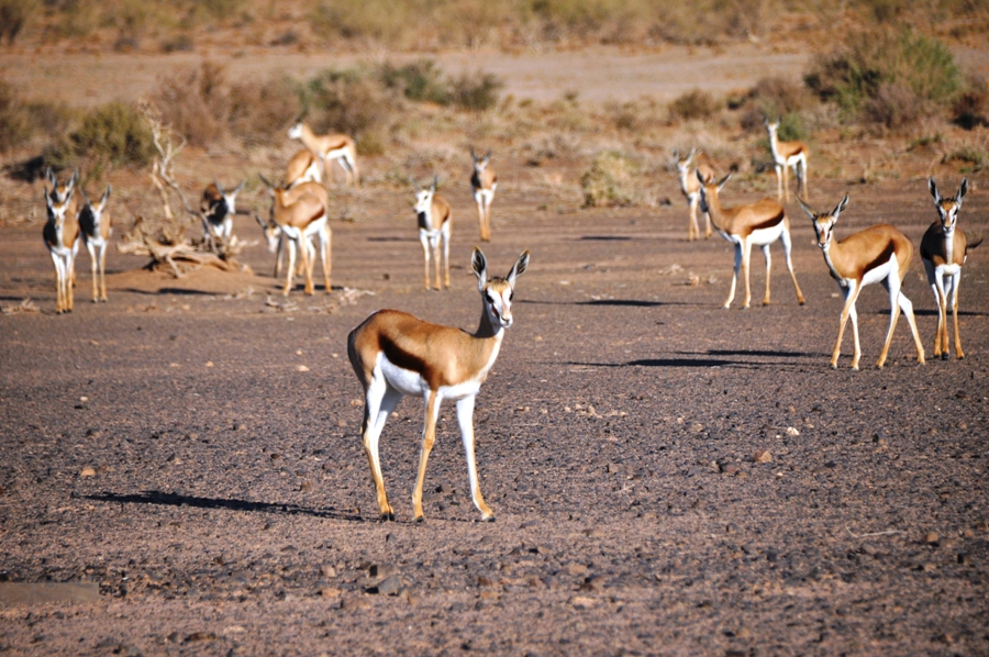itinerario di viaggio fai da te in Namibia