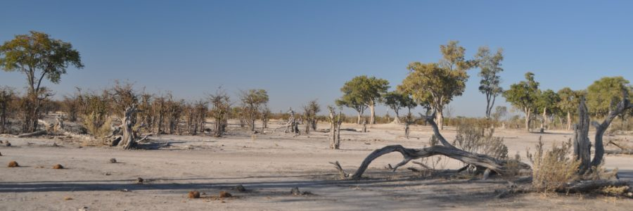 Safari nella Moremi Game Reserve