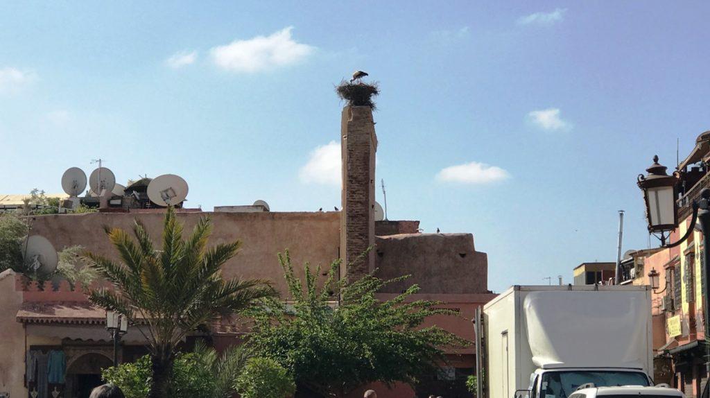 Cosa vedere a Marrakech Cicogna