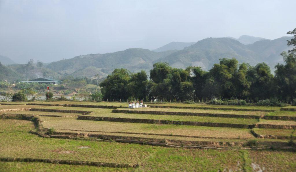 Risaia in Vietnam