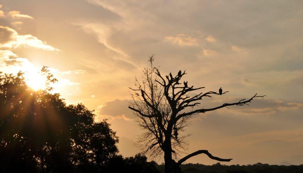 Tramonto nel Kruger National Park