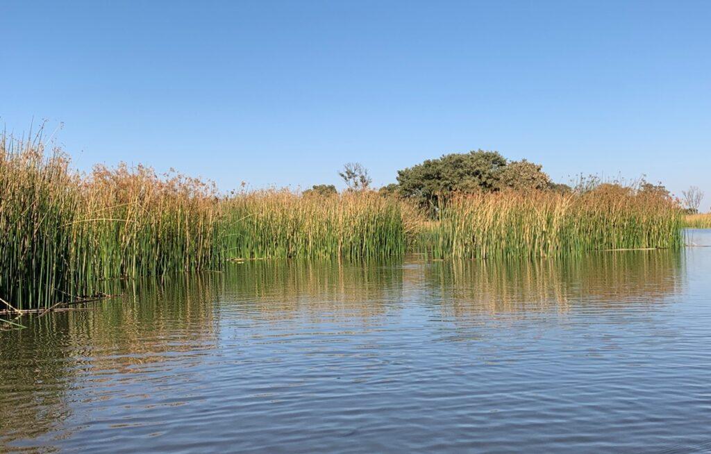 Canneto sull'Okavango