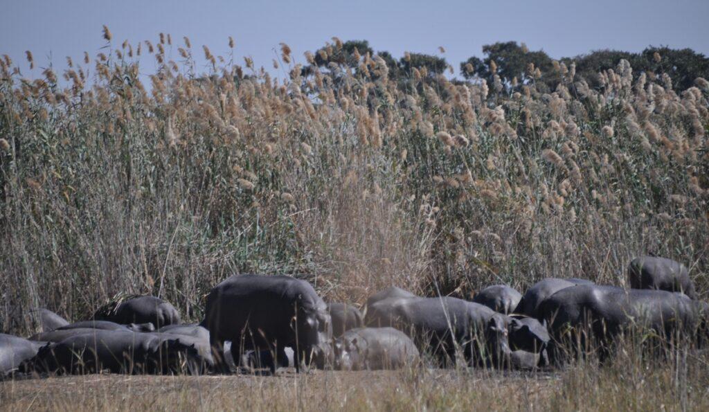Tour del Delta Okavango