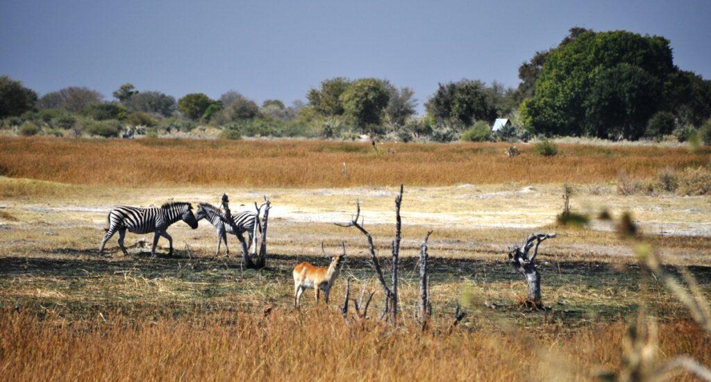 Tour Delta Okavango