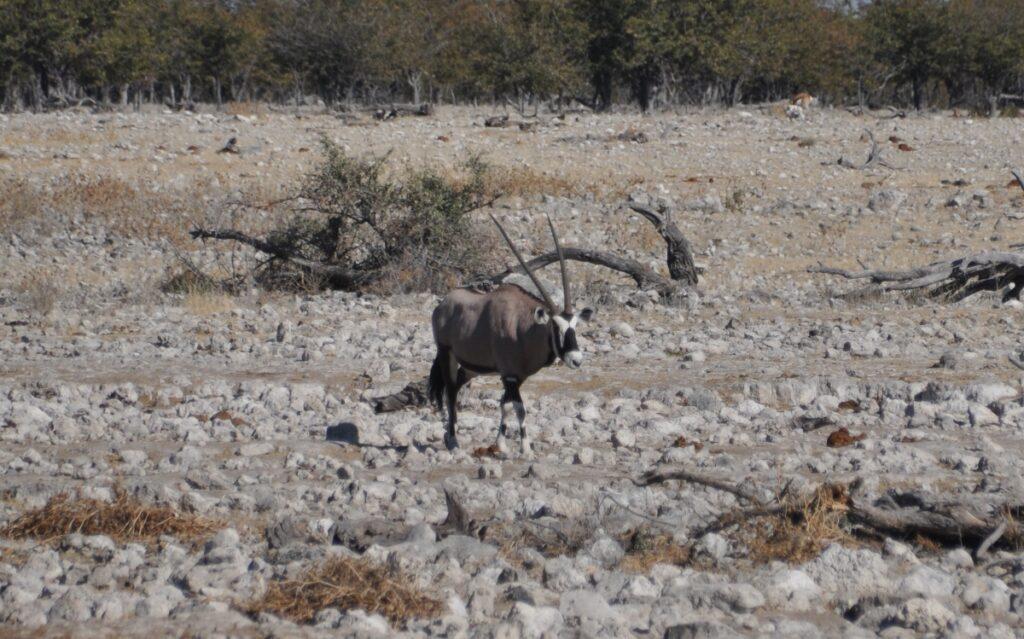 Parco Nazionale di Etosha