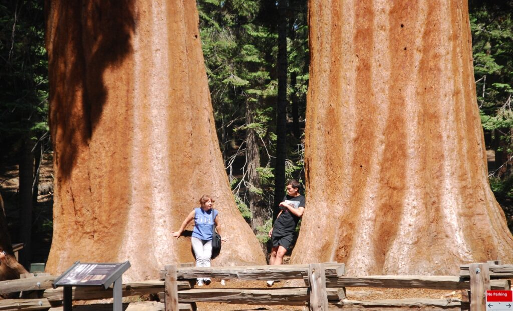 Parco Nazionale delle Sequoie